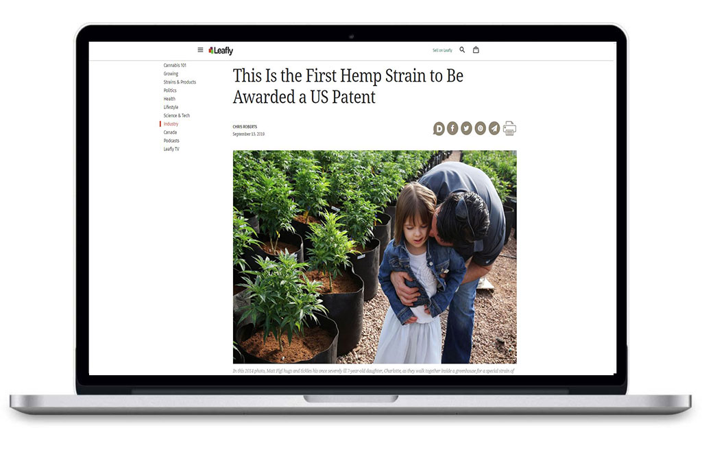 Laptop browsing Leafly Article about Hemp Strain